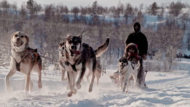 vidéos et rushes de slo mo directeurs un attelage de chiens de traîneau dans la neige - chien de traîneau