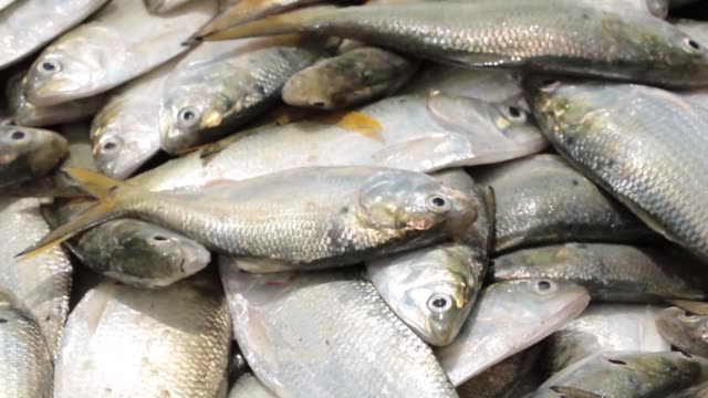 Guinea is failing to tackle illegal fishing a condition for exporting fish to Europe