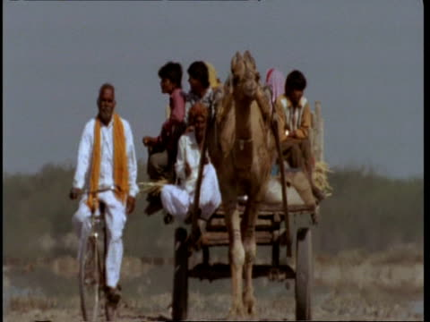 ms gujarat, indian family on cart being pulled by camel, man cycling alongside, to camera, gujarat, india - indian ethnicity点の映像素材/bロール