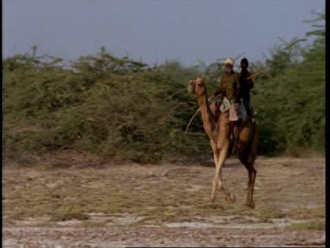 vídeos y material grabado en eventos de stock de mwa 2 gujarat, indian men riding camel, trotting through scrub, gujarat, india - tocado accesorio de cabeza