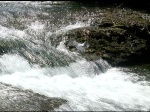 gull 3-ntsc mit ton - fluss niagara river stock-videos und b-roll-filmmaterial
