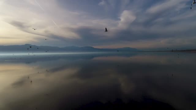 gull flight over the salton sea - dramatic sky stock videos & royalty-free footage