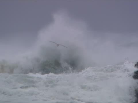 vídeos y material grabado en eventos de stock de gull on rock - artbeats