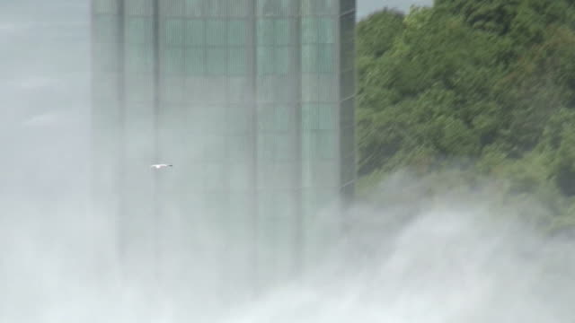 Gull over Niagara 2 - HD/SD 60i