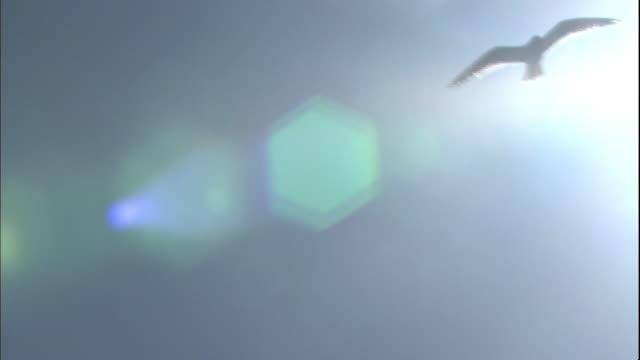 a gull soars near a brilliant sunbeam. - カモメ科点の映像素材/bロール