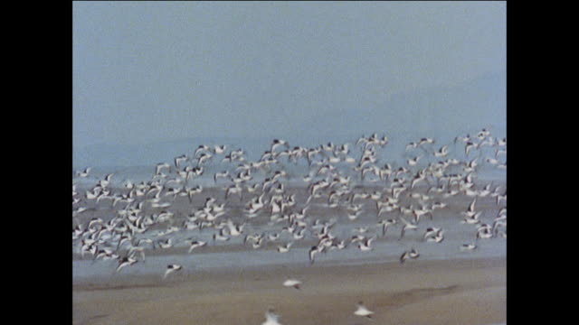 montage gulls and other sea birds gather along the british coast / united kingdom - peter greenaway stock videos & royalty-free footage