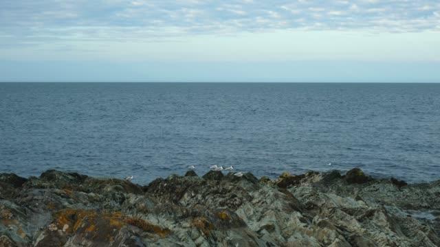 Gulls at the Coast