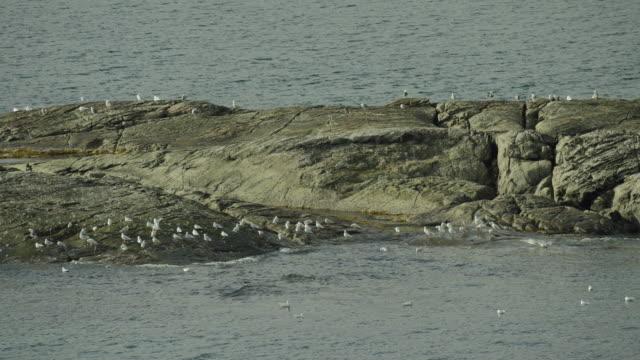 Gulls Congregate On Tiny Rocky Islet