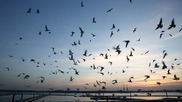 Gulls flock silhouetted against the sunset in Southampton Docks UK on Friday October 31 2014