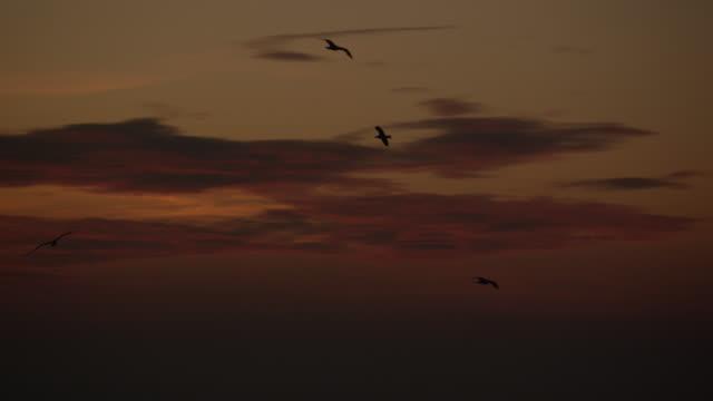 Gulls fly over sea and coastal cliffs at sunrise, Gibraltar