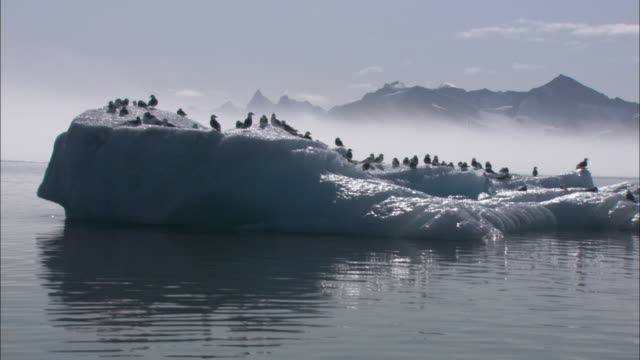 Gulls rest on an iceberg in Svalbard, Norway.