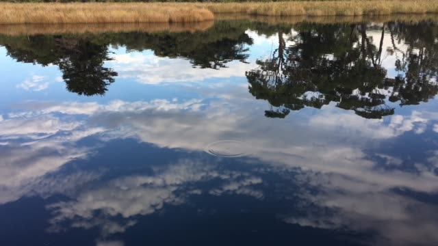 Gum trees reflection over calm water