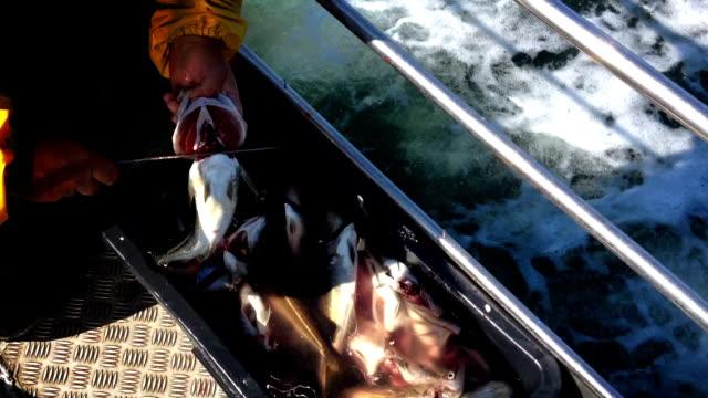 vídeos de stock e filmes b-roll de destripando o peixe - amanhar o peixe