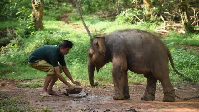 guwahati, assam, india. 16 june 2020. an animal keeper feeds a wild elephant calf, which was rescued after she stray away from her herd, at assam... - glucose stock videos & royalty-free footage