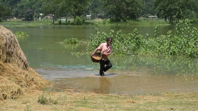 stockvideo's en b-roll-footage met guwahati assam india 29 may 2020 a farmer carries paddy wade through flood water at mayong village in morigaon district of assam friday may 29 2020 - strohoed