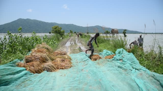 guwahati, assam, india. 29 may 2020. farmers unloading paddy from a boat in a safer place, after carries paddy wade through flood water at mayong... - kopfbedeckung stock-videos und b-roll-filmmaterial