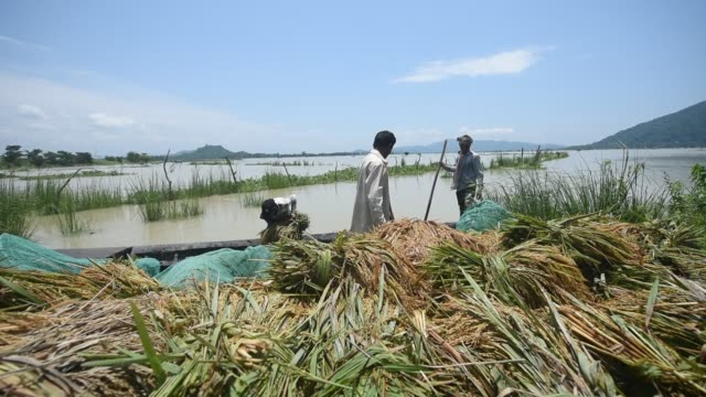 stockvideo's en b-roll-footage met guwahati assam india 29 may 2020 farmers unloading paddy from a boat in a safer place after carries paddy wade through flood water at mayong village... - strohoed