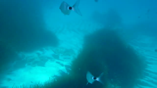 guy doing snorkel in the idyllic and clear waters of menorca island with a lot of fishes during a summer travel. - minorca stock videos & royalty-free footage