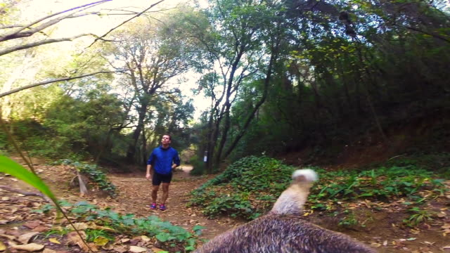 Guy walking beagle dog and doing sport in the beautiful mediterranean forest from dog personal perspective and camera attached to the back of the dog showing his point of view.