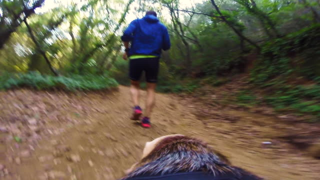 guy walking beagle dog and doing sport in the beautiful mediterranean forest from dog personal perspective and camera attached to the back of the dog showing his point of view. - one mid adult man only stock videos & royalty-free footage
