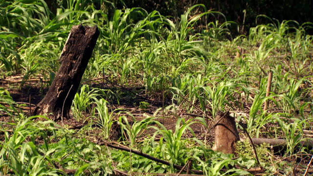 vídeos de stock e filmes b-roll de gvs deforestation in mexican state of chiapas - chiapas