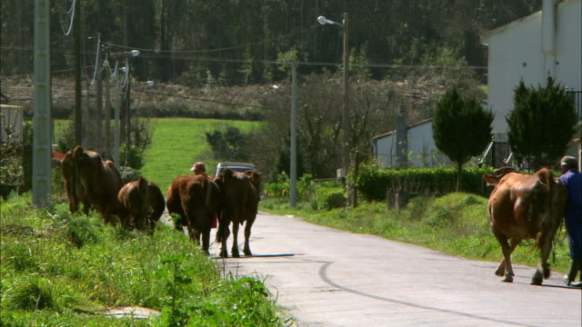 gvs galicia rural scenes, spain - on the move stock videos & royalty-free footage