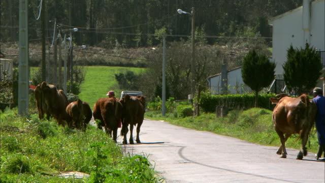vídeos y material grabado en eventos de stock de gvs galicia rural scenes, spain - galicia
