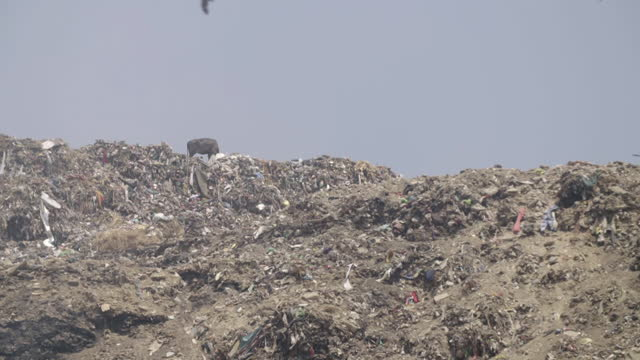 gvs huge landfill site in delhi, india - 埋め立てごみ処理地点の映像素材/bロール