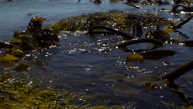 gvs kelp seen from from the surface of the ocean off of the western cape of south africa - kelp stock videos & royalty-free footage