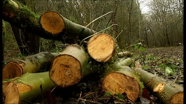 gvs northfields wood suffolk and tree felling england suffolk northfields wood ext close shot of moss on branch close shot of twigs and leaves pile... - 小枝点の映像素材/bロール