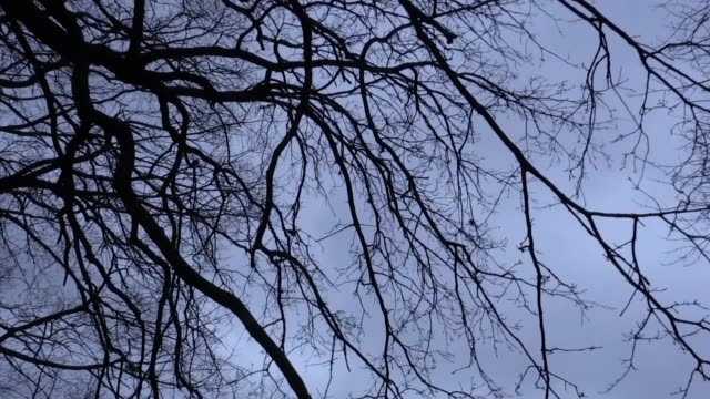 gvs of grey and windy weather at hampstead heath, one of the highest points in london. the met office have issued amber weather warnings for... - storm stock videos & royalty-free footage