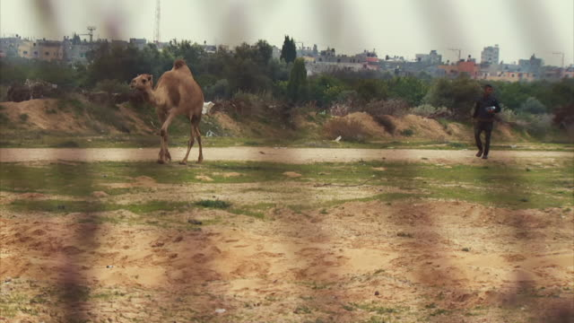 gvs of the heavily fortified border crossing between israel and gaza - camel stock videos & royalty-free footage