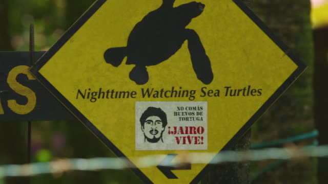 gvs of turtle conservation activists in costa rica - costa rica stock videos & royalty-free footage