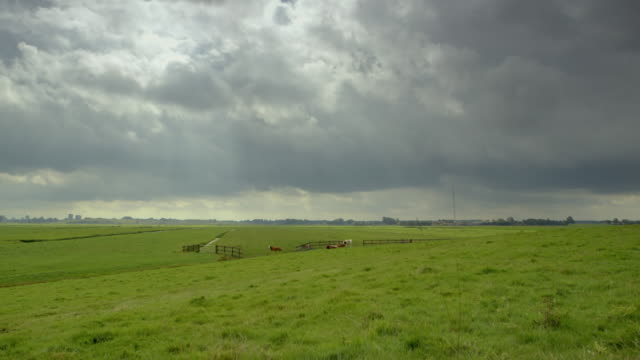 gvs rural landscapes, netherlands - small group of animals stock videos & royalty-free footage
