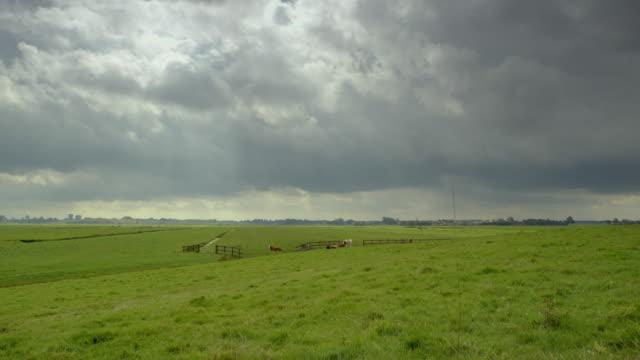 gvs rural landscapes, netherlands - kleine gruppe von tieren stock-videos und b-roll-filmmaterial