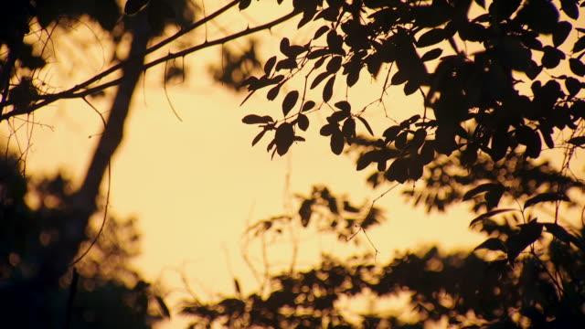 vídeos de stock e filmes b-roll de gvs southern mexican rainforest at dusk - chiapas
