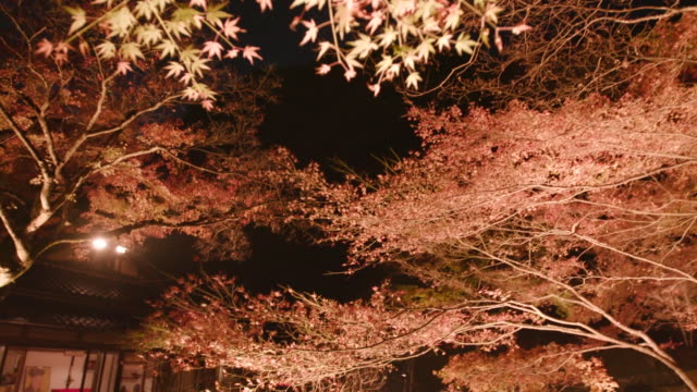 "gyorakuen was designated as a scenic spots by fukuoka pref in 1978 the garden was built for the expression of the wish to the peace by ""sesshu"" the... - tatami mat stock videos and b-roll footage"
