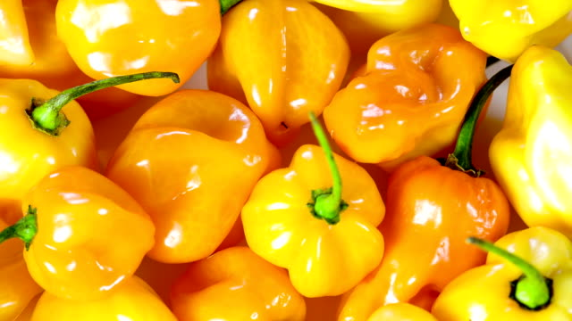 peperoncino habanero - peperone video stock e b–roll