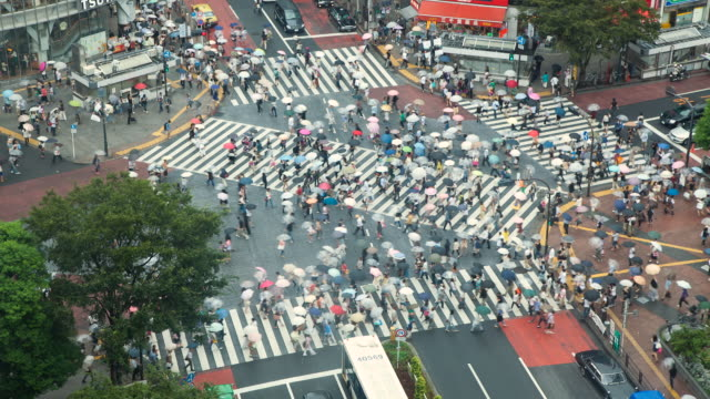 ms t/l hachiko square pedestrian crossing seen from above during rain in shibuya district / tokyo, japan - crosswalk stock videos & royalty-free footage