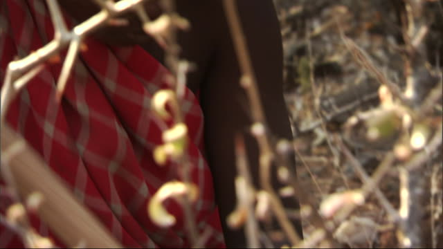 a hadza woman digs for tubers with a stick. - foraggiamento video stock e b–roll