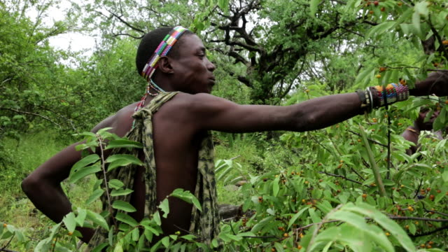 vidéos et rushes de hadzabe hunters eating fruits in the forest - culture indigène