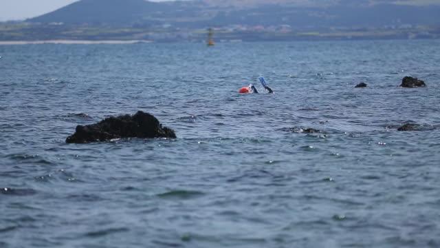 vídeos de stock, filmes e b-roll de ms haenyeo (jeju female professional diver) swimming in sea / jeju-do, south korea - boia equipamento marítimo de segurança