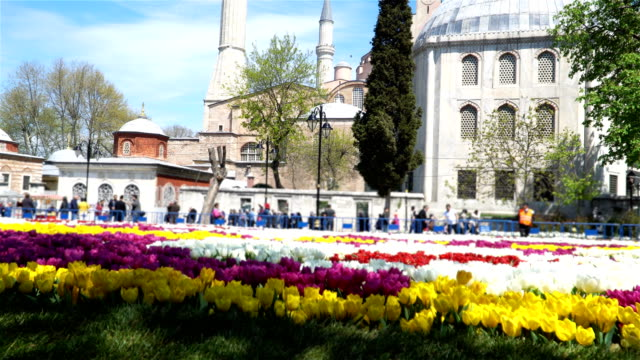 4k hagia sophia with tulips  - stock video - camisole stock videos & royalty-free footage