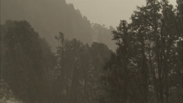 hail falls in front of trees, chopta, india available in hd. - monsoon stock videos and b-roll footage
