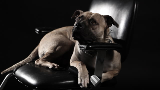 hair salon dog - chair stock videos & royalty-free footage