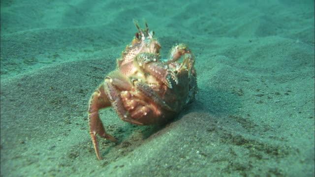 hairy crab in the bottom of the sea of hokkaido - カニ点の映像素材/bロール