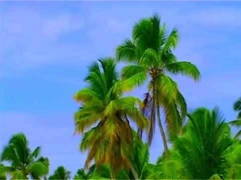 haiti island. beach, palm tree, the blue sky, nature background - tropical tree stock videos & royalty-free footage