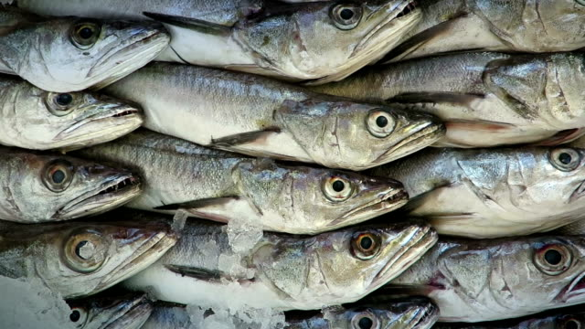 hake fish at the fishmarket - fish market stock videos and b-roll footage