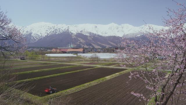 Hakuba mountain range and cherry blossoms