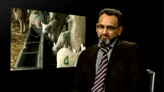 halal slaughtermen filmed abusing animals in thirsk abattoir; london: int saqib mohammed interview sot - if you have trained people who cannot cause... - チッペナム点の映像素材/bロール